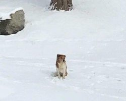 Abandoned Dog Waits 5 Days in the Cold for Her Family to Come Back for Her