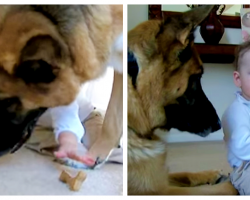 Baby Steals Treat From German Shepherd, Dad Captures Dog's Reaction On Camera