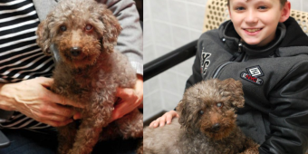 Boy Visits The Shelter And Picks Out The Oldest Dog To Adopt
