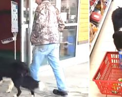 Dog Walks Into Store, Begins Picking Out His Treats- Wins Everyone's Hearts