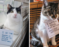 17 Very Bad Cats Hilariously Fessing Up To Their Crimes