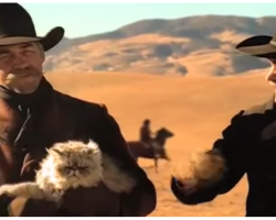 Hunky Cowboys Herding Cats In Laugh-Out-Loud Commercial Is The Best Thing On TV