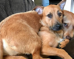 Dog Finds Her 'Twin' While On A Walk, Convinces Owner To Adopt Him