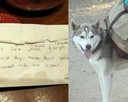 Dogs Abandoned At Dog Park With All Their Toys – And The Saddest Note Ever