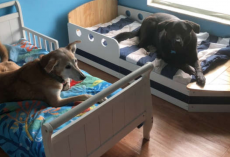 Family Has Seven Rescue Dogs, And Each One Has Its Very Own Bed