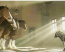 Tiny Donkey Wanted Desperately To Be A Clydesdale, So He Pleads His 'Case'