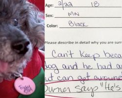 Couple Surrenders Dog Near The End Of His Life To Shelter Because He's 'Stupid'