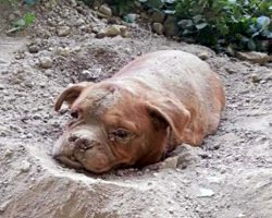 "Man Tried To Bury His Dog Alive Because He ""Didn't Want Her Anymore"""