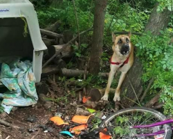 Someone Left A Dog Tied In The Woods With Empty Bowls And A Crate For Survival