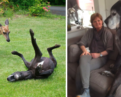 21 Pics That Prove Great Danes Are The True Gentle Giants Of The World