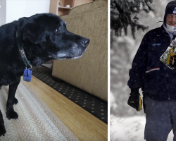 Mailman Sees Senior Dog Struggling With The Steps Every Day And Intervenes