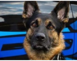 Police Dog Shot And Killed In Line Of Duty, Community Mourns The Canine Hero