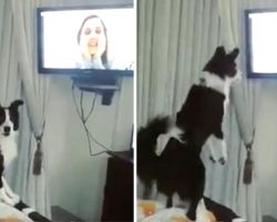 Mom's Been Away From Her Dog For 9 Months. When She Video Calls, Her Dog Loses It