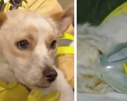 Dog Refuses To Leave Burning House Because He's Protecting 4 Little Friends Inside
