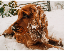 If Keep Your Dogs Outside In Extreme Temperatures, Expect A Ticket And A Fine