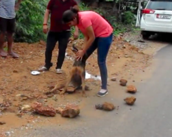 Dog Found Surrounded By Stones In The Road Needed Some Serious Help