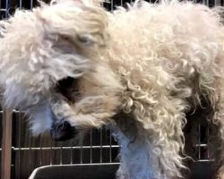 Heartless Family Says Senior Dog Is Too Old For Them, Dumps Her Off At A Shelter