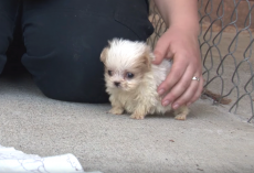 Dog Rescued From Puppy Mill Is Introduced To A Friend To Signal A New Beginning