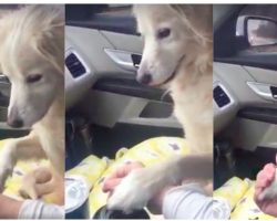 Orphaned Dog Pulled From Shelter Refuses To Let Go Of Rescuer's Hand