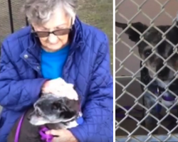 92-Year-Old Woman Forced To Give Up Best Friend For Senior Care, But Dog Gets 'Adopted'