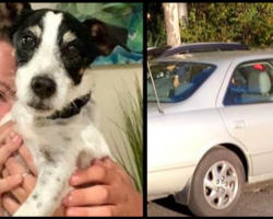Man Spots Stolen Dog In Thief's Car– Calls His Name And Gets Dramatic Reply