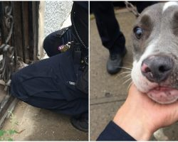 Cop Saved Dog Chained To Door, Then Dog Gave Him A Look That Changed Everything