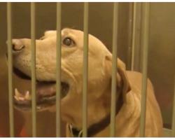 Cop Demoted After He Dumps Retired Police Dog At Animal Shelter
