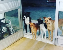 4 Stray Dogs Wait At Hospital Door When Homeless Man They Love Gets Sick