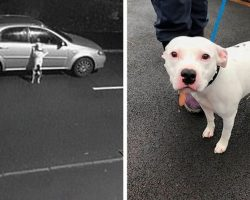 Dog Doesn't Realize He Is Being Abandoned, Desperately Tries To Get Back In Car