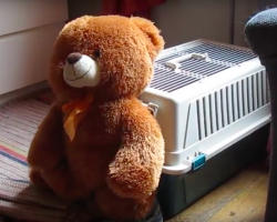 Mom Set Up Camera When Teddy Bear Keeps Disappearing and Captured The Footage