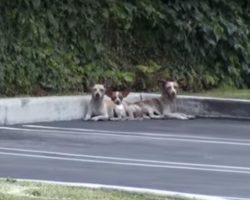 3 Dogs Were Dumped In a Parking And Left to Starve, Then One Phone Call Changed Everything