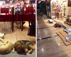 Cold Dogs Take Shelter In Mall, Store Owners Welcome Them With Open Arms