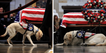 George H.W. Bush's Beloved Service Dog 'Sully' Has A Heartwarming New Mission