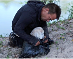 When man saves discarded puppy, he couldn't anticipate what the dog would achieve