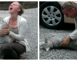Long Lost Schnauzer Reunited With Owner – Dog Passes Out From Excitement