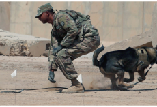 Army Ranger Dog Dies Saving U.S. Soldiers During Fierce Afghanistan Fight