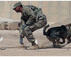 Army Ranger Dog Dies Saving U.S. Soldiers During Fierce Afghanistan Fight