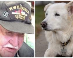 Nobody Wanted 13-Yr-Old Shelter Dog 'Til Elderly Veteran Took One Look At Him