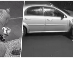 Dog Frantically Tries To Jump Back Into Car After Owner Abandons Him