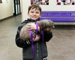 Little Boy's Touching Gesture Of Wanting The Oldest Dog Didn't Go Unnoticed By Staffers