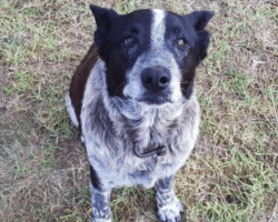 17-year-old dog loyally stays with age 3 girl lost in woods for more than 15 hours
