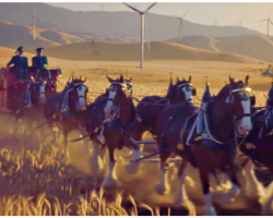 Budweiser's 2019 Super Bowl Ad – Starring Famous Clydesdales, A Dog, And The Wind