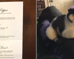 Woman Leaves Nephew The Most Detailed Instructions For Babysitting Her Dog