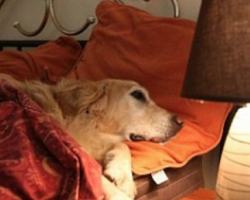 Man Asks Hotel If He's Allowed To Bring His Dog And Gets The Most Honest Answer