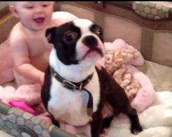 Mom Begs Her Dog To Get Out of The Baby's Crib But Then Acts So Adorably Disobedient