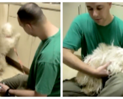 Abused Dog Sits In Kennel Waiting To Die Until A Miracle Of Love Happens