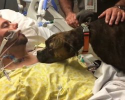 Dog visits hospital to say goodbye to her dying owner – When she does, everyone is in tears.