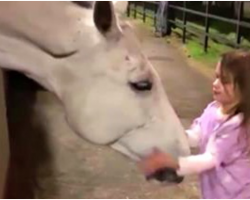 4-Yr-Old Tries To Calm Horse – Mom Films As She Does Something Extraordinary
