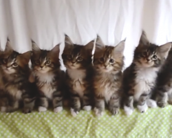 Kittens Hear Their Favorite Song, But When They Start Dancing, It's The Best Thing Ever – SOO Adorable!