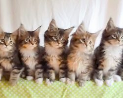 "Kittens Do Synchronized Dancing To ""Uptown Funk"", Their Cute Dance Is Caught On Tape"